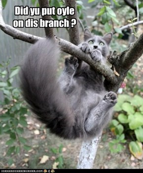 Did yu put oyle on dis branch ?