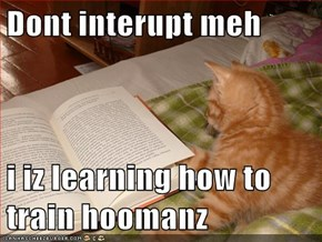 Dont interupt meh  i iz learning how to train hoomanz
