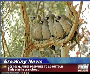 Breaking News - GOSPEL QUARTET PREPARES TO GO ON TOUR Birds plan to branch out.
