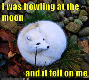 I was howling at the moon  and it fell on me