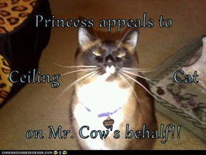Princess appeals to  Ceiling                         Cat on Mr. Cow's behalf!!