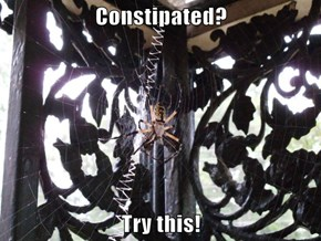 Constipated?  Try this!