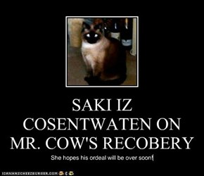 SAKI IZ COSENTWATEN ON MR. COW'S RECOBERY