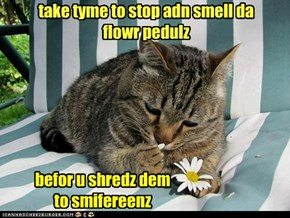 take tyme to stop adn smell da flowr pedulz
