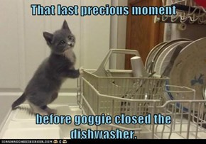 That last precious moment  before goggie closed the dishwasher.