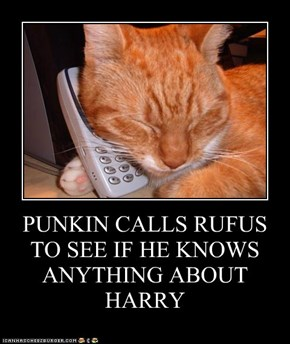 PUNKIN CALLS RUFUS TO SEE IF HE KNOWS ANYTHING ABOUT HARRY