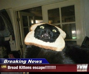 Breaking News - Bread Kittens escape!!!!!!!!
