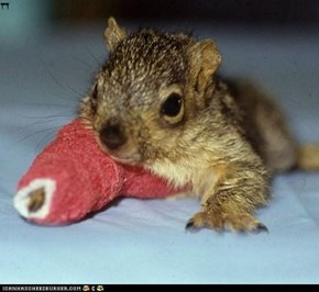 Baby squirrel has an owie