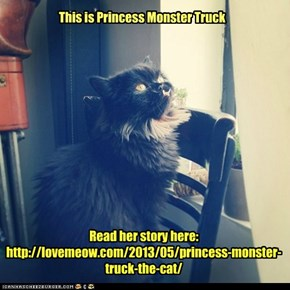New viral kitteh:  http://lovemeow.com/2013/05/princess-monster-truck-the-cat/