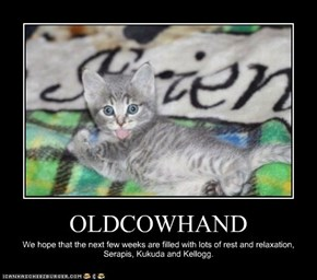 OLDCOWHAND
