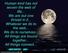 THE WEB OF LIFE...