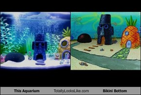 This Aquarium Totally Looks Like Bikini Bottom