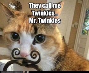 They call me Twinkles... Mr. Twinkles
