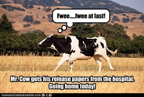 Mr. Cow finally gets his release papers signed. Will be going home from the hospital TODAY! Free at Last!