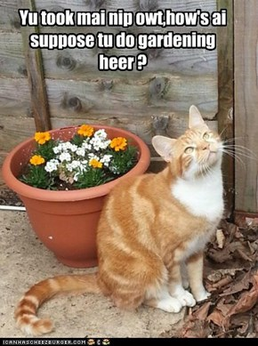Yu took mai nip owt,how's ai suppose tu do gardening heer ?