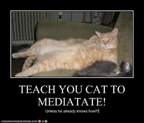 TEACH YOU CAT TO MEDIATATE!