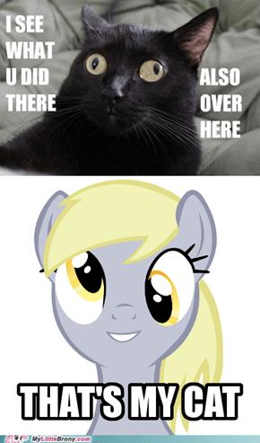 Derpy's Cat