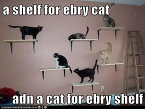 a shelf for ebry cat  adn a cat for ebry shelf