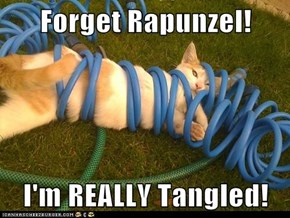 Forget Rapunzel!  I'm REALLY Tangled!