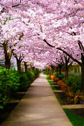 Taking a Walk Under the Petals
