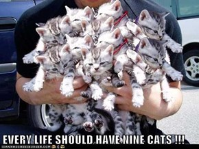 EVERY LIFE SHOULD HAVE NINE CATS !!!