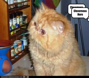 Catnip?