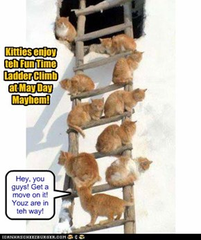 Kitties enjoy teh Fun Time Ladder Climb at May Day Mayhem!