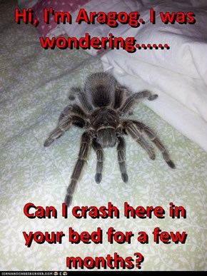 Hi, I'm Aragog. I was wondering......  Can I crash here in your bed for a few months?