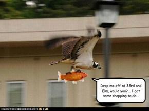 Bird Taxi Service