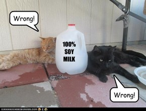 Even CATS don't like it!!