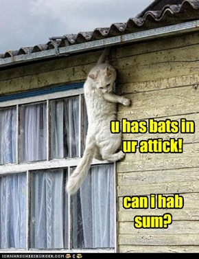 u has bats in ur attick!