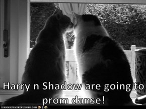 Harry n Shadow are going to prom danse!