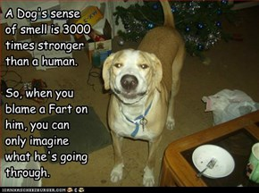 A Dog's sense of smell is 3000 times stronger than a human.  So, when you blame a Fart on him, you can only imagine what he's going through.