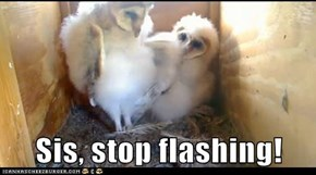 Sis, stop flashing!