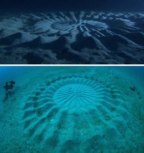 Pufferfish Make Underwater Crop Circles