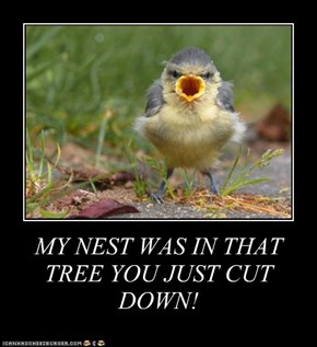 MY NEST WAS IN THAT TREE YOU JUST CUT DOWN!
