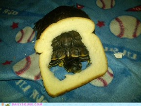 I Bread My Turtle