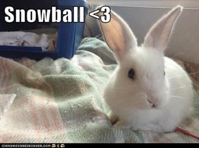 Snowball <3