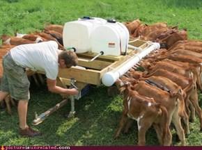 Artificial Cow