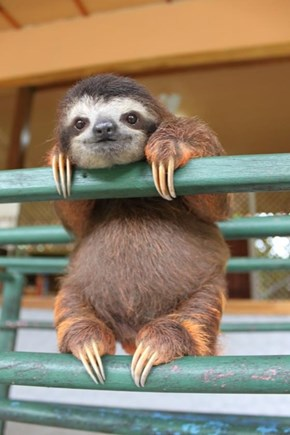 Sloth on the rails