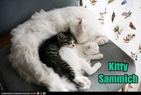 Kitty Sammich