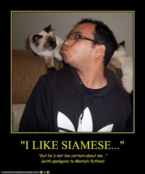"""I LIKE SIAMESE..."""