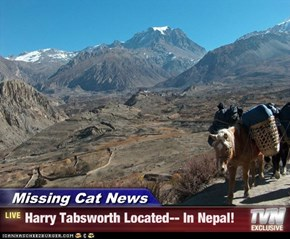Missing Cat News - Harry Tabsworth Located-- In Nepal!