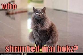 who  shrunked mai bokz?