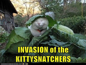 INVASION of the KITTYSNATCHERS