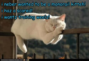 i neber wanted to be a monorail kitteh! i haz a scared! i wantz training weelz!