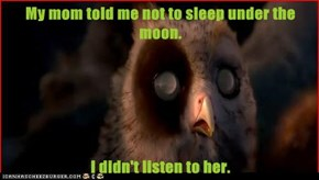 My mom told me not to sleep under the moon.  I didn't listen to her.