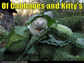 Of Cabbages and Kitty's