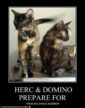 HERC & DOMINO PREPARE FOR
