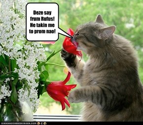 Rufus sends Shadow some flowers by way of apology.